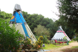 Miss Daisys TeePees 0772