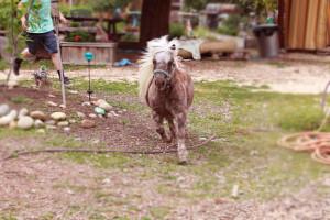 boy chasing donkey 0709