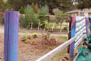 fence and garden 0748
